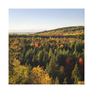 forest canvas canvas print