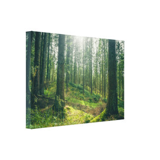 Forest clearing in the spring canvas print