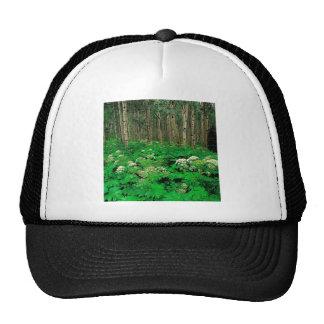 Forest Cow Parsnip Quaking Aspen Trucker Hat