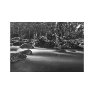 Forest Creek Black and White Photograph Canvas Print