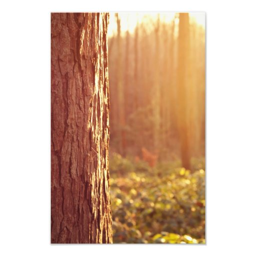 Forest Dream Photography Print Photograph