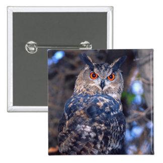Forest Eagle Owl, Bubo bubo, Native to Eurasia 2 15 Cm Square Badge