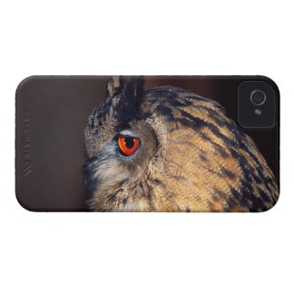 Forest Eagle Owl, Bubo bubo, Native to Eurasia iPhone 4 Case-Mate Case