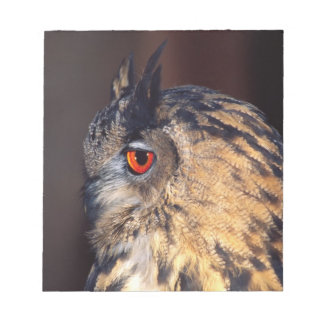 Forest Eagle Owl, Bubo bubo, Native to Eurasia Notepad