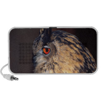 Forest Eagle Owl, Bubo bubo, Native to Eurasia Travel Speakers
