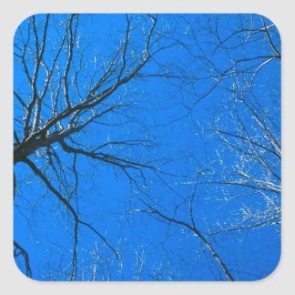 Forest East Deciduous Tennessee Square Sticker