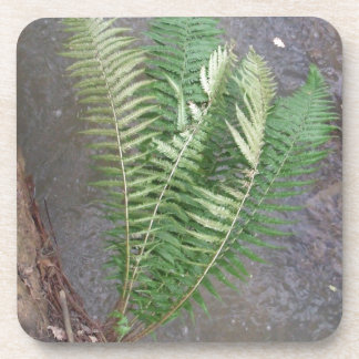 Forest Fern Over Water Beverage Coaster