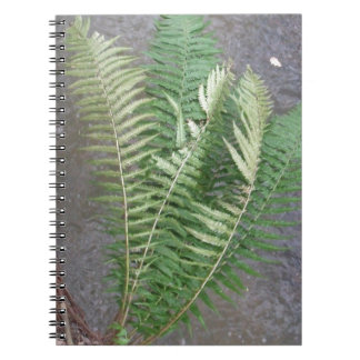 Forest Fern Over Water Spiral Notebook