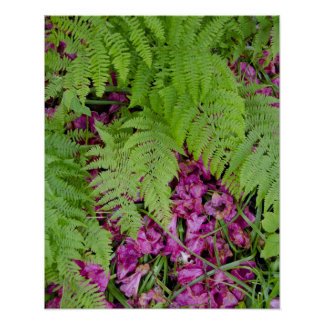Forest ferns with pink flower petals on ground poster