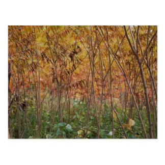 Forest Floor Postcard