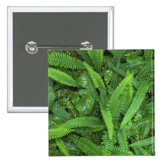 Forest Floor, Quinault Rain Forest, Olympic NP, 15 Cm Square Badge