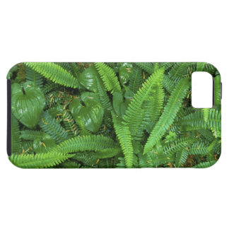 Forest Floor, Quinault Rain Forest, Olympic NP, iPhone 5 Covers