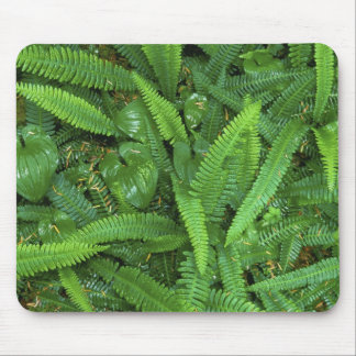Forest Floor, Quinault Rain Forest, Olympic NP, Mouse Mat