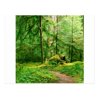 Forest Gray Wolf River Trail Olympic Postcard
