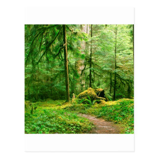 Forest Gray Wolf River Trail Olympic Postcards