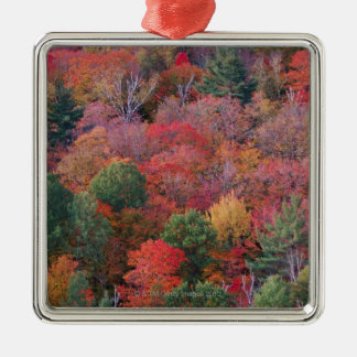 Forest in autumn with fall foliage.  Algonquin Silver-Colored Square Decoration