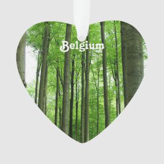 Forest in Belgium