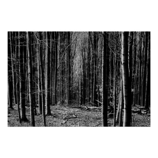Forest in Black and White Poster