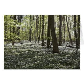 Forest in springtime 2 card