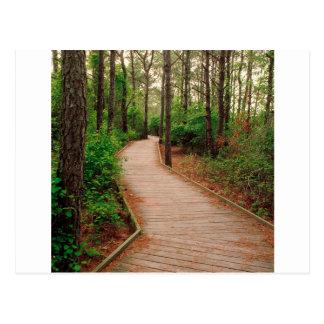 Forest Life Trail Assateague Berlin Maryland Postcard