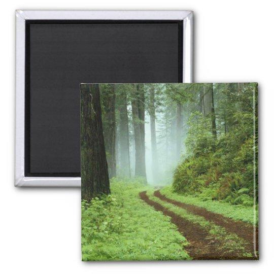 Forest Magnet