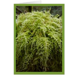 Forest Moss Card