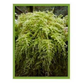 Forest Moss Postcard