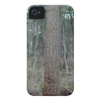 Forest mossy ground and tree trunks iPhone 4 cases