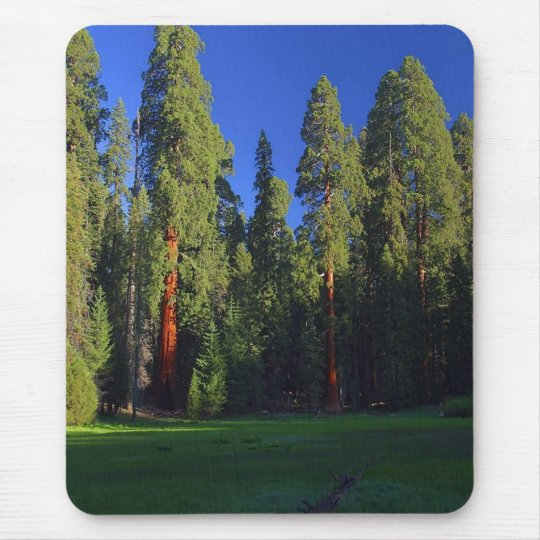 Forest mousepad