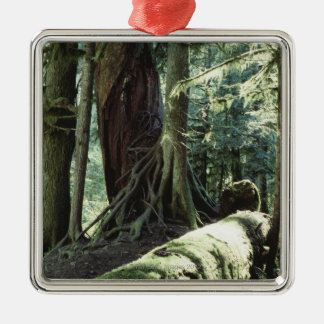 Forest of Cathedral Grove in British Columbia Christmas Ornament