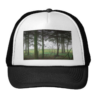 Forest overlooking clearing in the fog cap