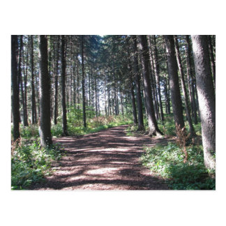 Forest Path Collection Postcard