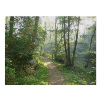Forest Path in Denmark Poster