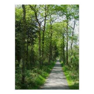 Forest Path in Partial Sunlight Photo Poster Art