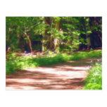 Forest Path Postcard