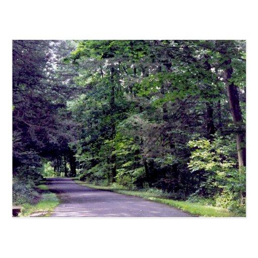 Forest Path - postcard