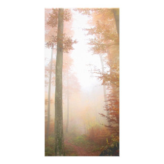 forest photo greeting card