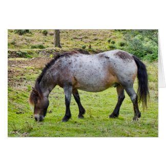 Forest Pony - Greeting Card