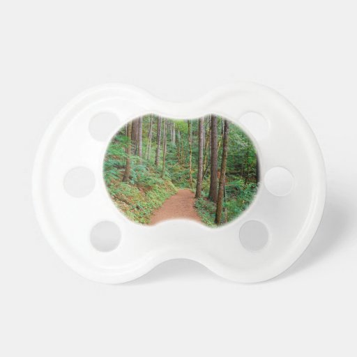 Forest Quiet Trail Columbia River Gorge Pacifier