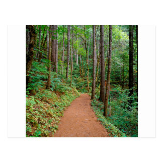 Forest Quiet Trail Columbia River Gorge Post Card