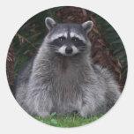 Forest Racoon Round Sticker