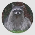 Forest Racoon Stickers