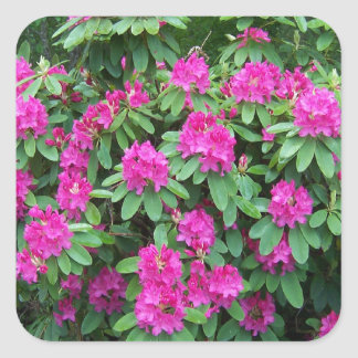 Forest Rhododendron Square Sticker