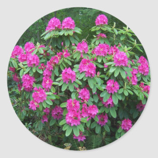Forest Rhododendron Round Sticker