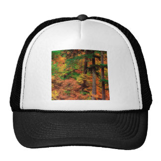 Forest Russeted Woodl Cascade Mountains Cap