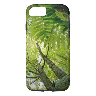 Forest scene in Acadia National Park, Maine. iPhone 8/7 Case