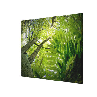 Forest scene in Acadia National Park, Maine. Stretched Canvas Print