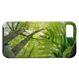 Forest scene in Acadia National Park, Maine. Tough iPhone 5 Case