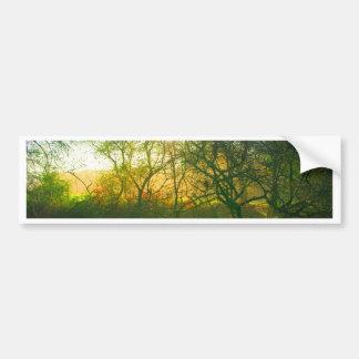 Forest Spectrum Bumper Sticker