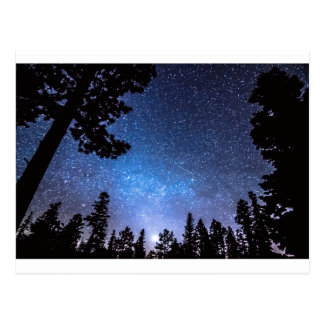 Forest Star Gazing An Astronomy Delight Postcard